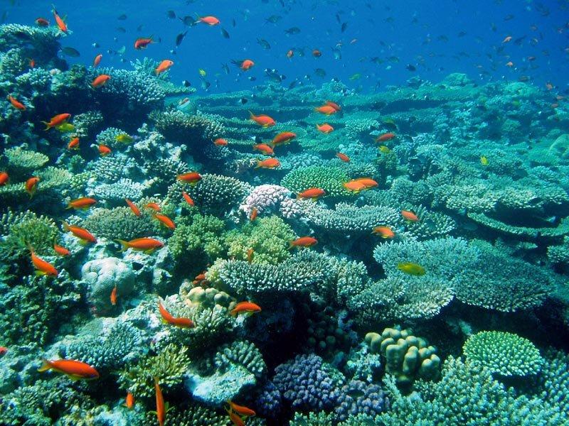гантелями штангой растения атлантического океана фото и названия часть