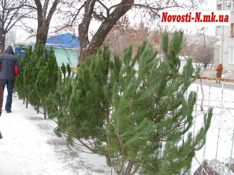 елка и ель в чем разница фото