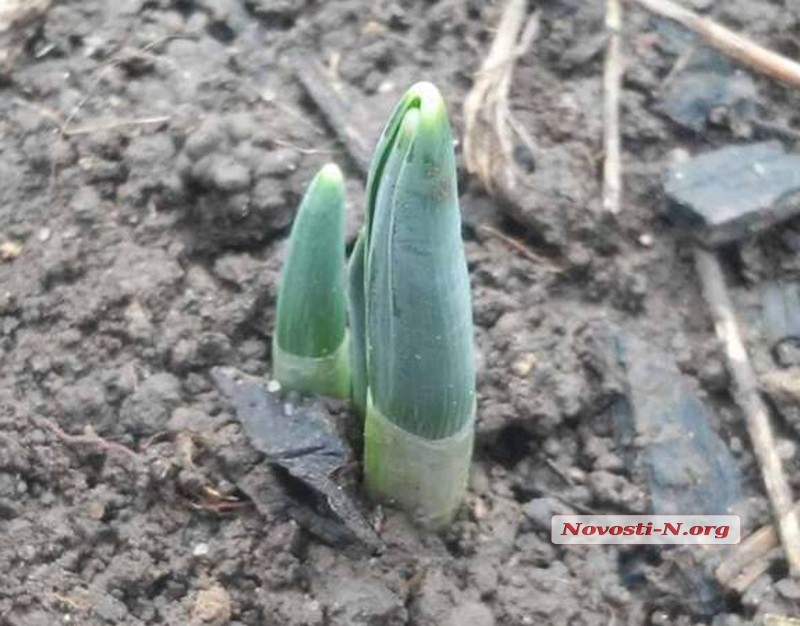 Весна пришла в Николаев намного раньше обычного (фото)