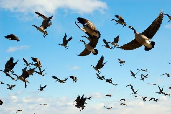 Птицы массово умирают наХерсонщине, причина мора неведома