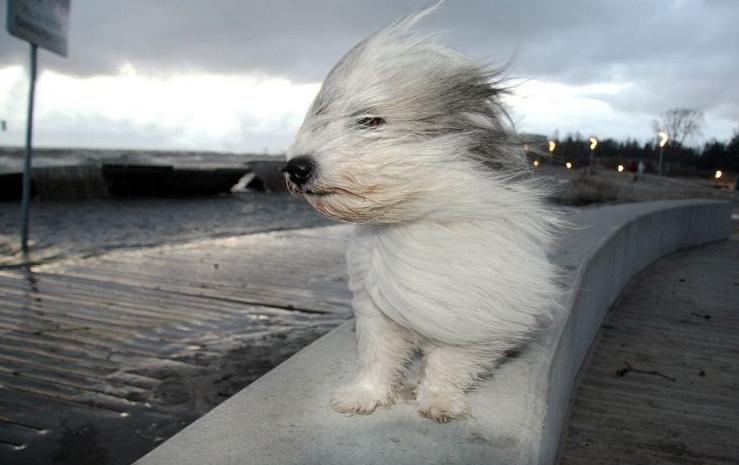 В Николаев нагрянет шторм