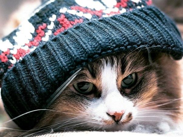 ВКрыму снег иштормовой ветер, вСевастополе похолодает донуля градусов