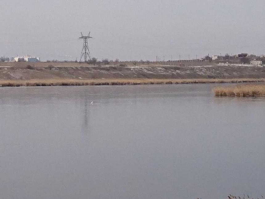 На николаевской речке птицы попали в ледяной плен (фото)