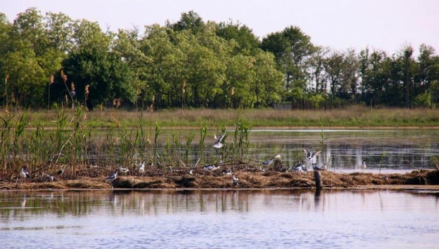 Под Николаевом создали искусственный остров для редких и исчезающих пт