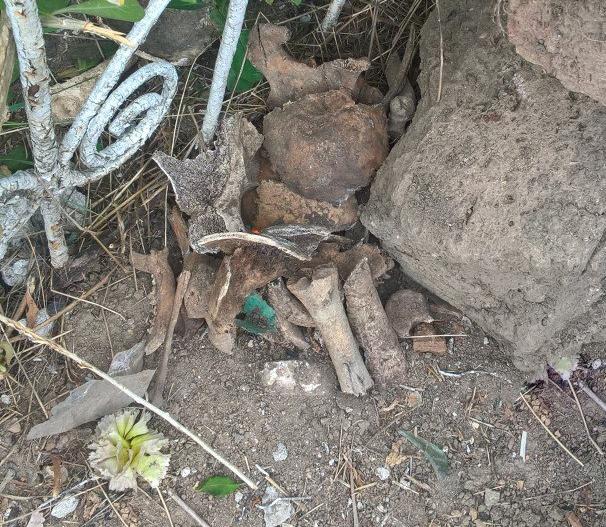 У Миколаєві під час прибирання знайшли людські кістки