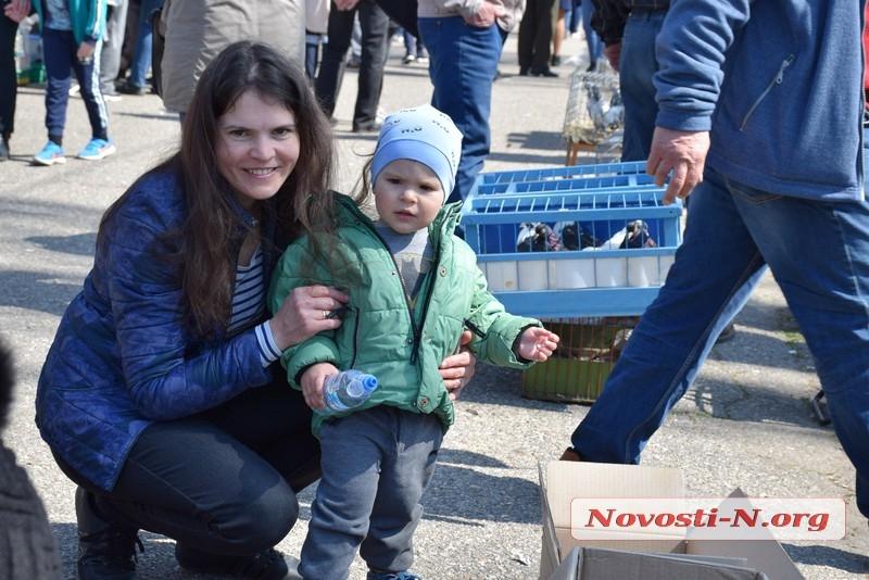 Выставка-ярмарка голубей, г.Николаев, 30.03.2019г.