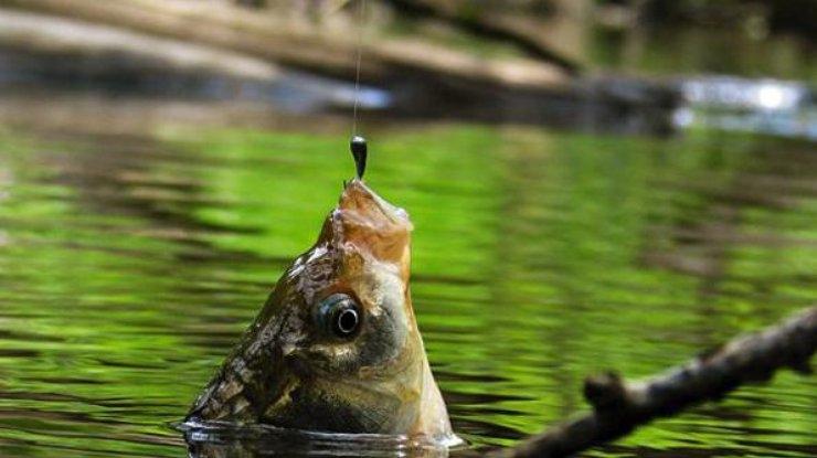 """Картинки по запросу """"запрет ловли рыбы"""""""