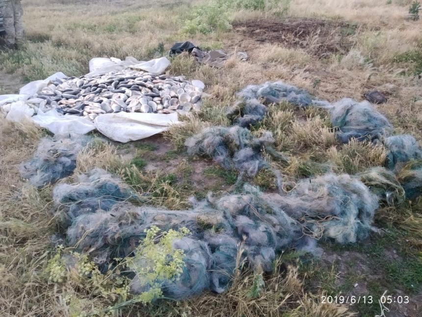 На Николаевщине браконьеры выловили сетями 166 кг карася