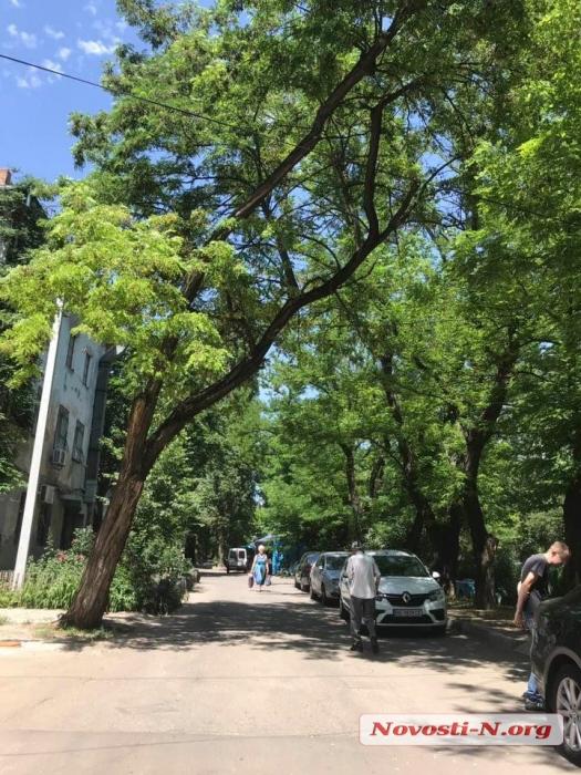 Администрация Центрального района уже год не спиливает аварийное дерево