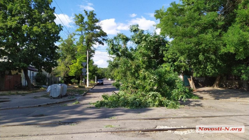 В центре Николаева дерево рухнуло на проезжую часть