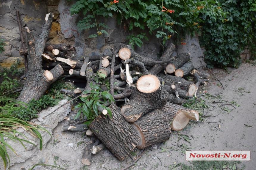 В центре Николаева пилители деревьев оставили без света целый двор