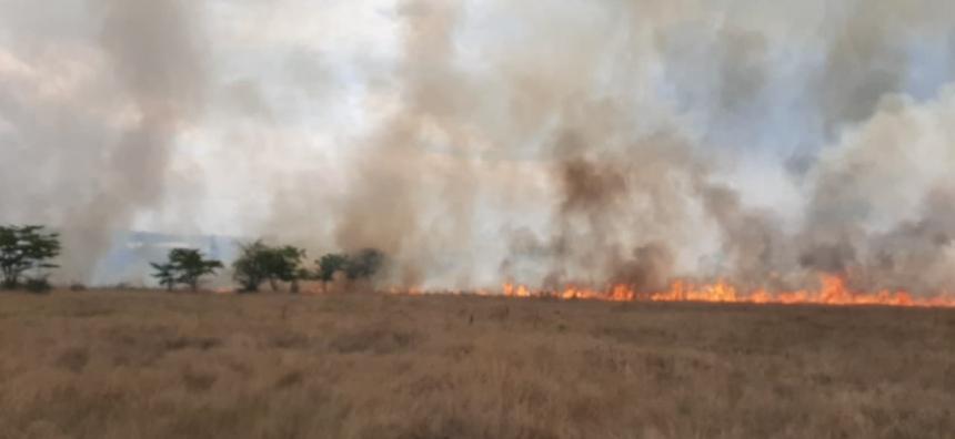 За сутки спасатели потушили шесть пожаров на полях Николаевщины