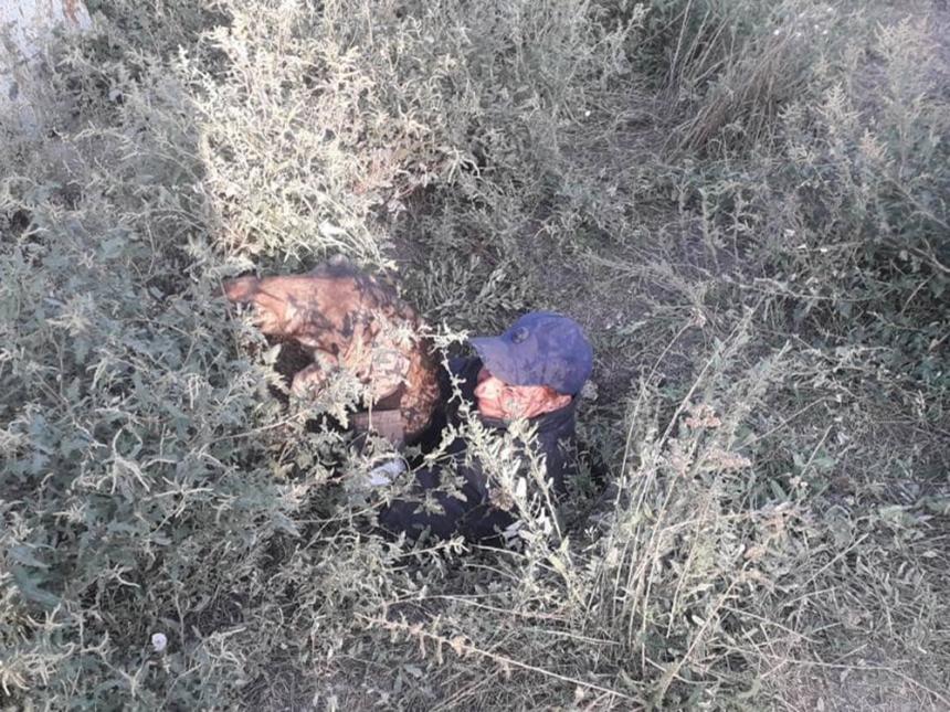 Спасатели Николаевщины достали трех собак из колодца