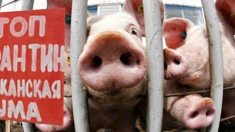 Вспышка АЧС на Николаевщине: зараженные туши свиней нашли на обочине трассы