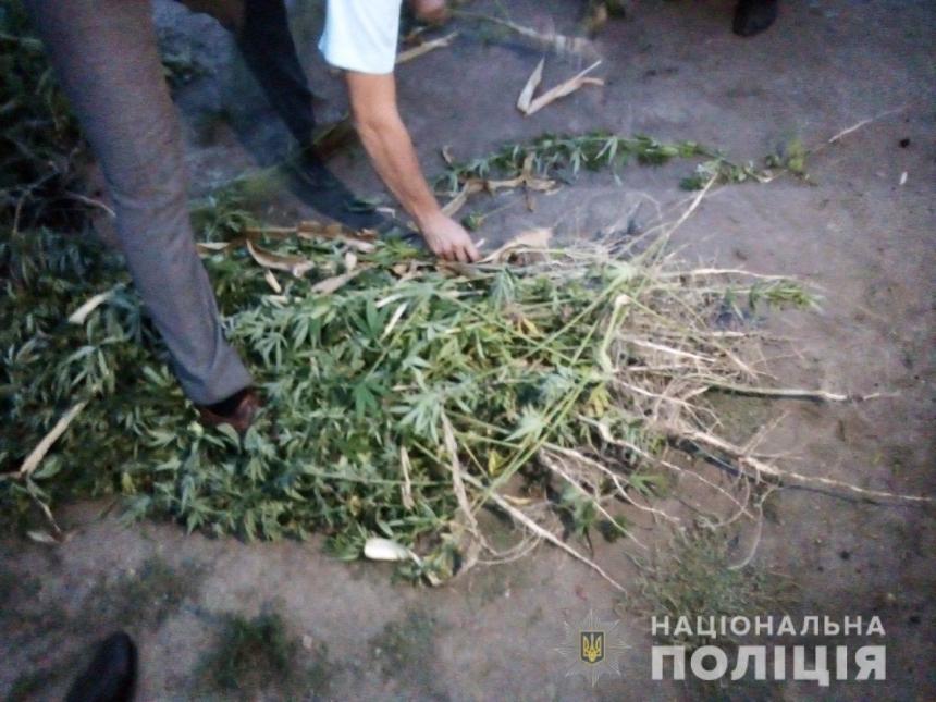 На Николаевщине «наркоаграрий» не хотел отдавать коноплю и избил полицейского