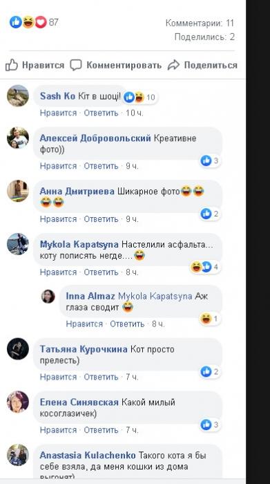 Дворовой кот попал на фото с мэром Николаева и стал знаменит