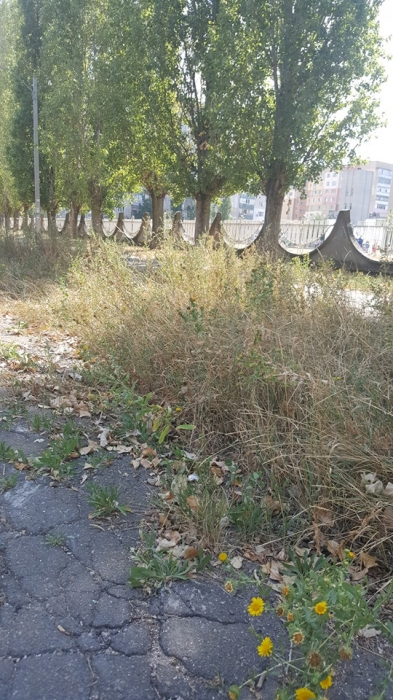 «За что мы платим деньги?»: николаевцы пожаловались на грязь и траву на Намыве
