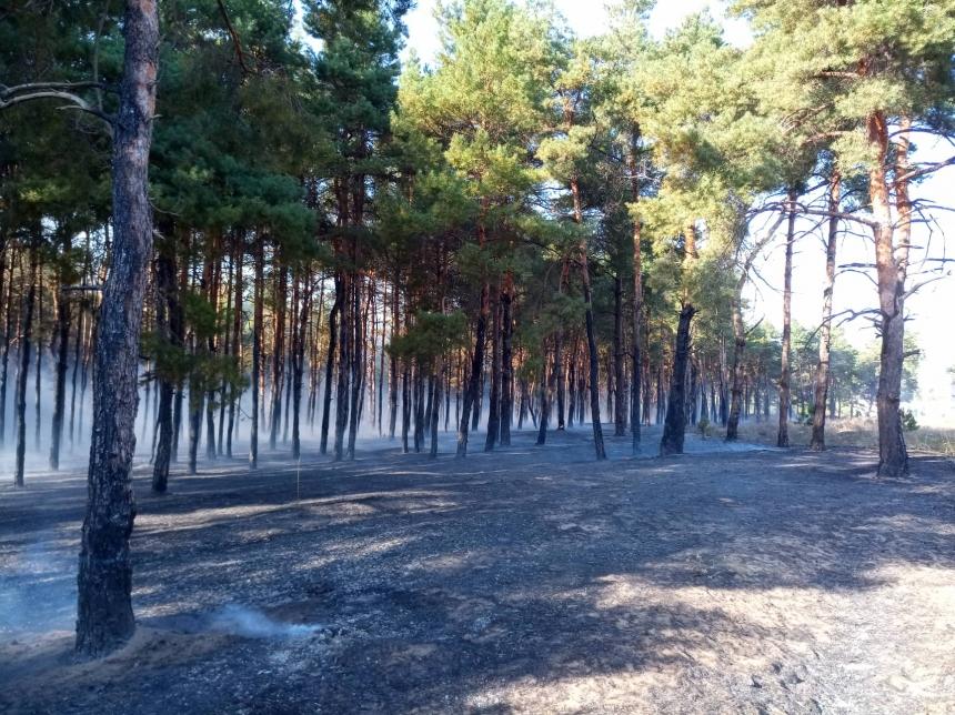 Под Николаевом неизвестные подожгли Балабановский лес. ВИДЕО