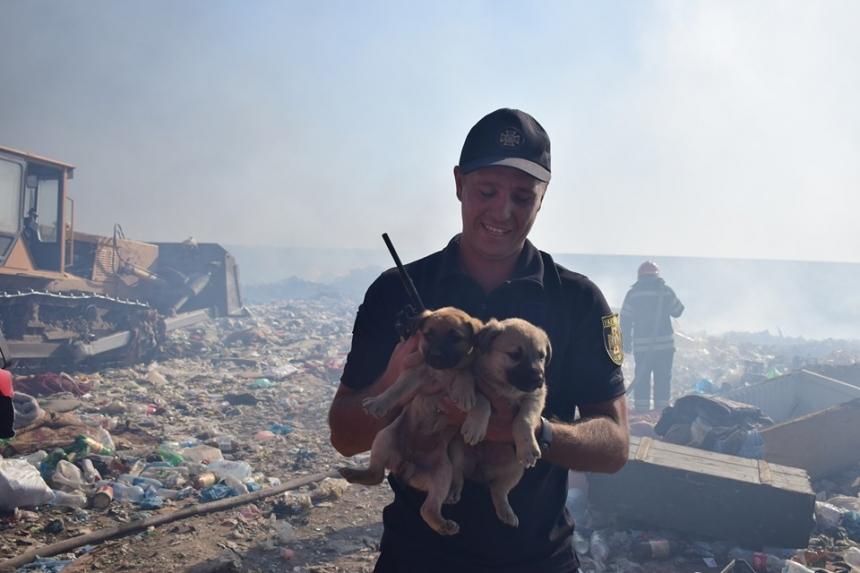 В Николаеве на свалке спасли щенков, достав из-под колес бульдозера