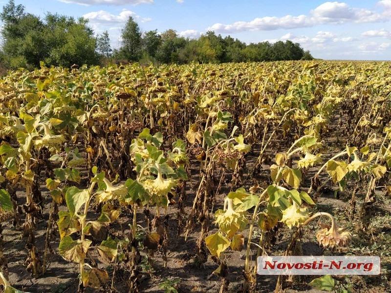 В Николаеве судья отказалась арестовать и передать государству незаконный урожай стоимостью 3 млн грн