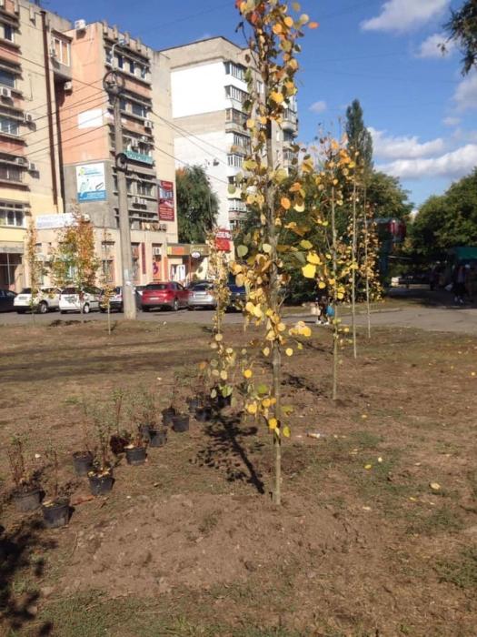 В Николаеве началась массовая высадка деревьев и кустарников