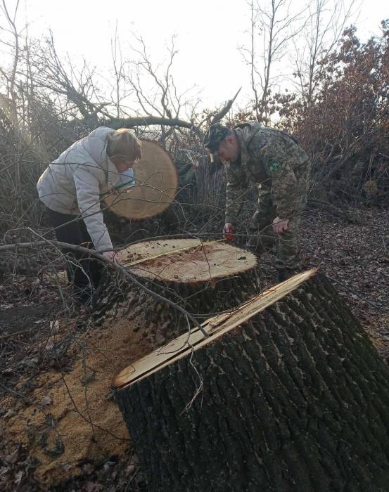 На Николаевщине браконьеры вырубили 41 дуб: ущерб почти миллион