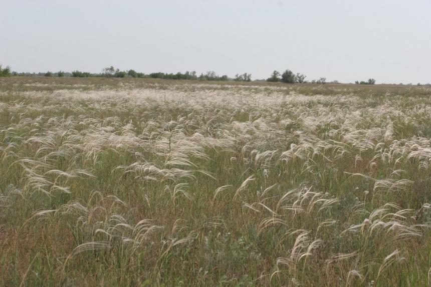В Березанке уничтожено несколько гектаров, на которых росли краснокнижные цветы