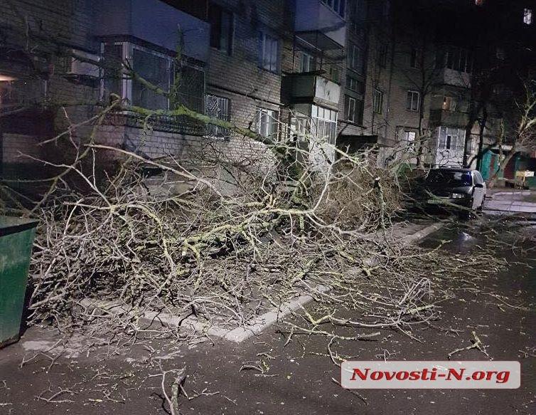 Поваленные деревья и бигборды: как в Николаеве прошла ветреная ночь