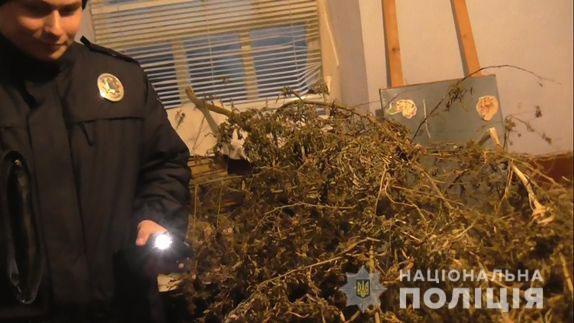 На Николаевщине у местного жителя нашли «деревья» конопли