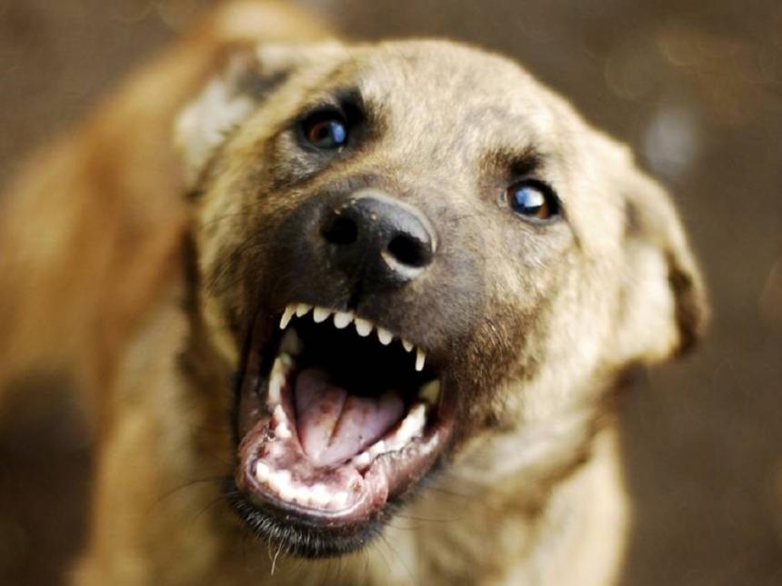 В Николаеве бродячая собака напала на ребенка