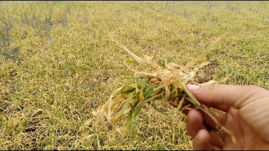 В Одесской области покончил с собой фермер, потерявший урожай из-за засухи