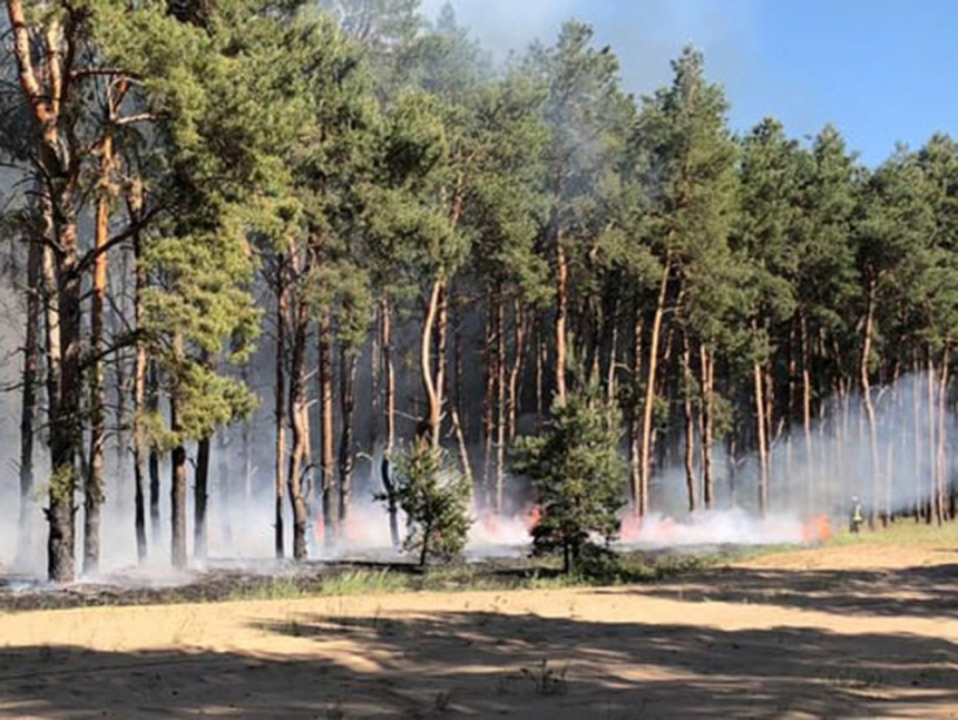 На Николаевщине из-за поджогов горели леса: