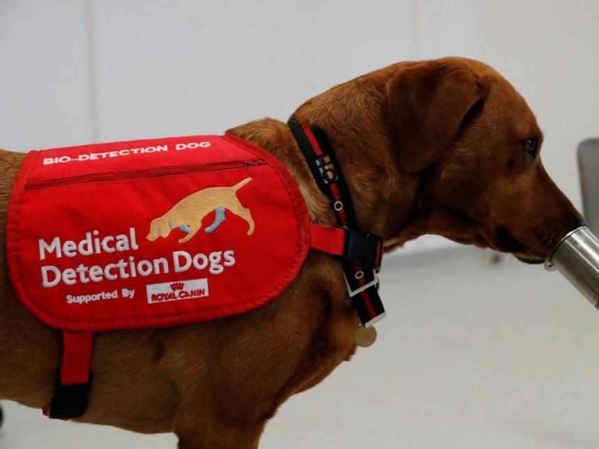 Собак научили определять больных СOVID-19 по запаху