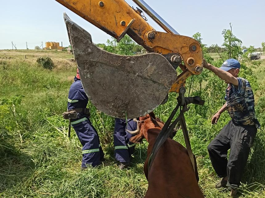 На Николаевщине спасатели достали корову, упавшую в яму