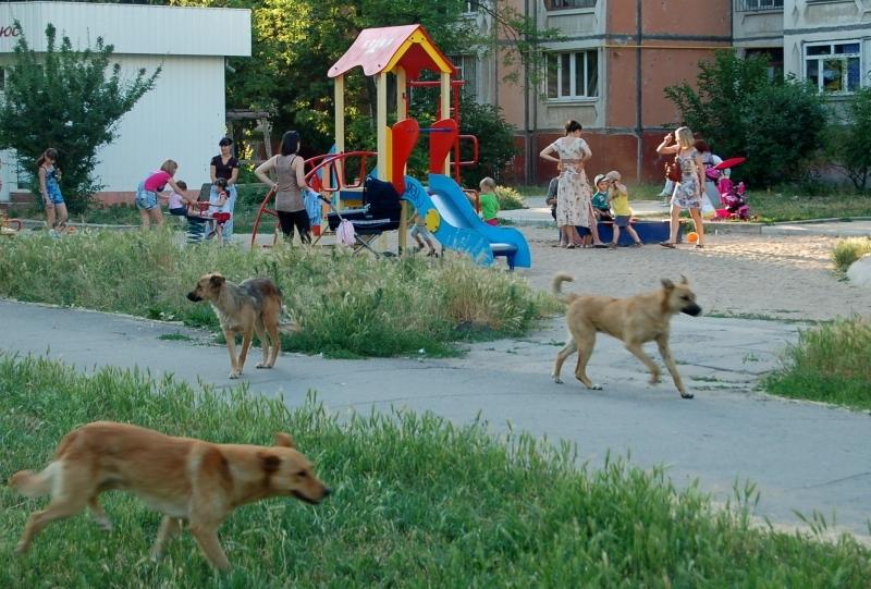 Бродячие собаки в волгограде куда жаловаться