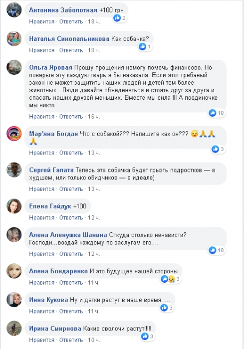 В сети аферисты собирают деньги на собаку, с которой «николаевские дети срезали шкуру»