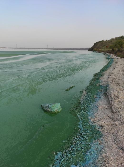 В Николаеве позеленела вода в реках — горожане массово делятся фотографиями