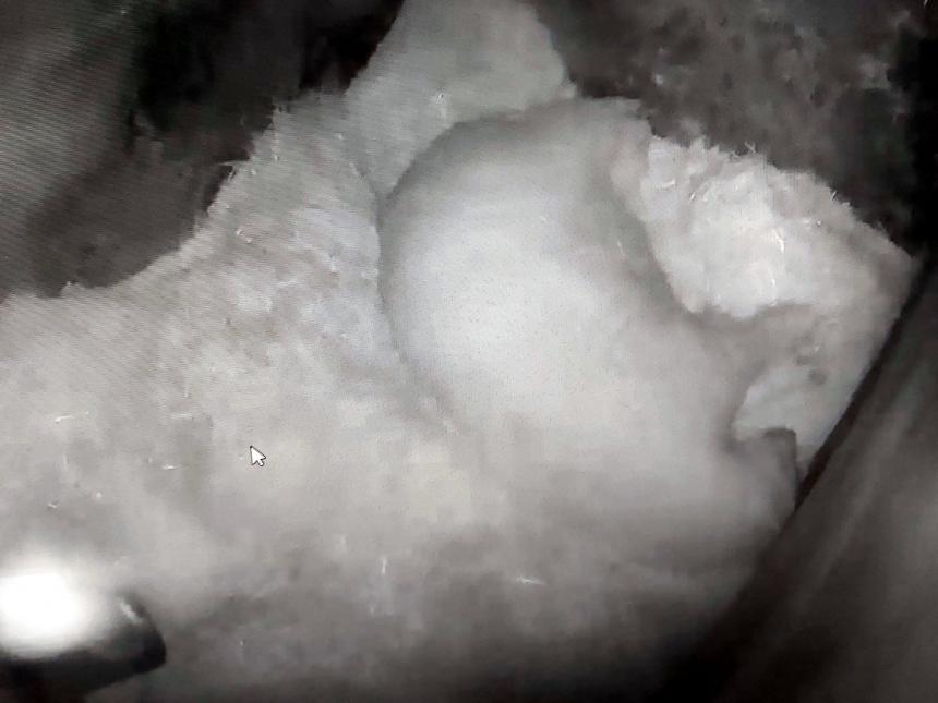 Белые медведи в Николаевском зоопарке впали в спячку