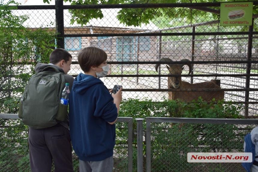 Николаевский зоопарк будет принимать посетителей во время локдауна