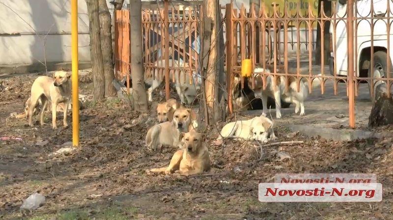 В Николаеве на мужчину напала стая собак