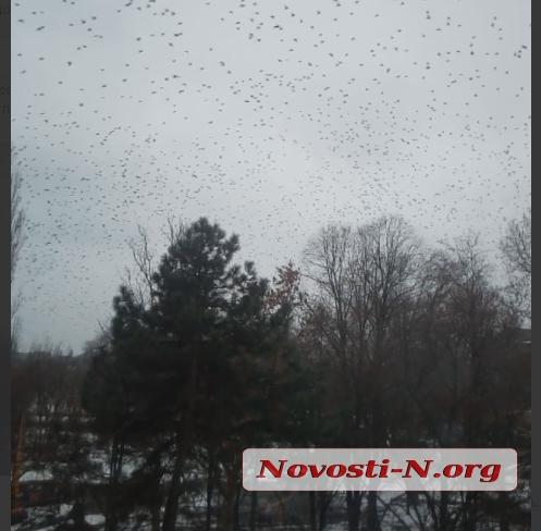 «Как над Римом»: жители Николаева фиксируют огромные стаи черных птиц над городом. ВИДЕО