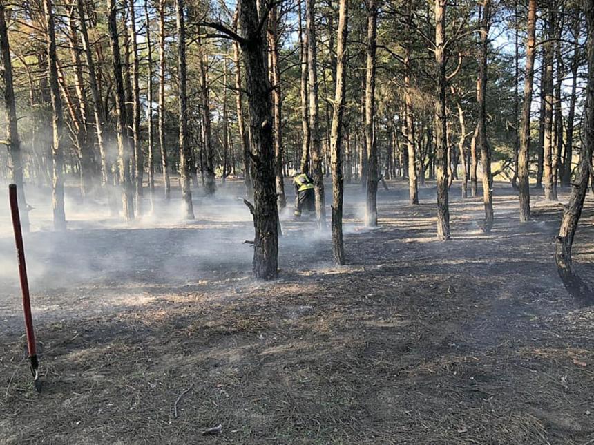 В Николаеве горит Балабановский лес