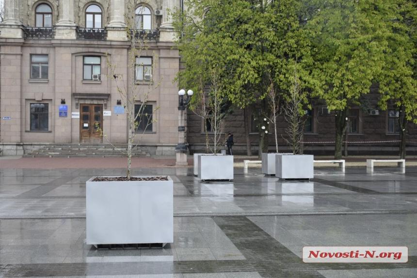 В Николаеве на Серую площадь вернули деревья в кадках