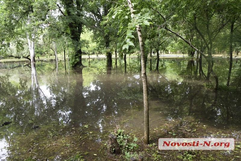 В парке «Победа» из-за дождей образовались настоящие озера и выросли камыши