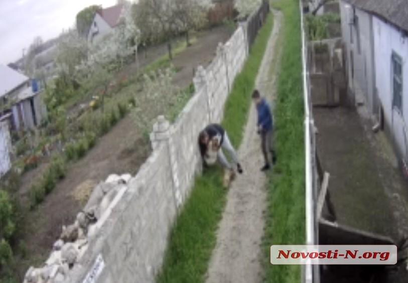 В Николаеве владельца алабая, который на глазах ребенка разорвал его собаку, оштрафовали на 80 грн