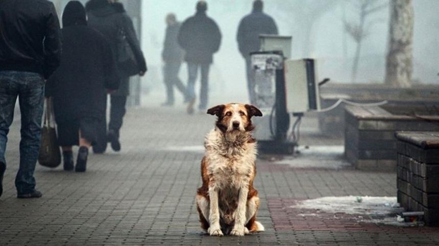 «Бросаются на детей, загрызают котов!»: николаевцы потребовали убрать собак с улиц