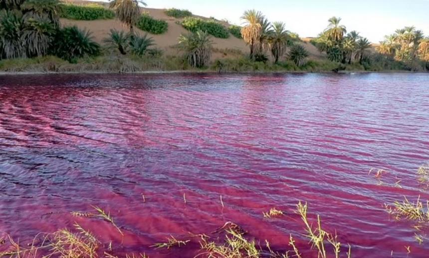 Вода возле Мертвого моря окрасилась в кроваво-красный цвет