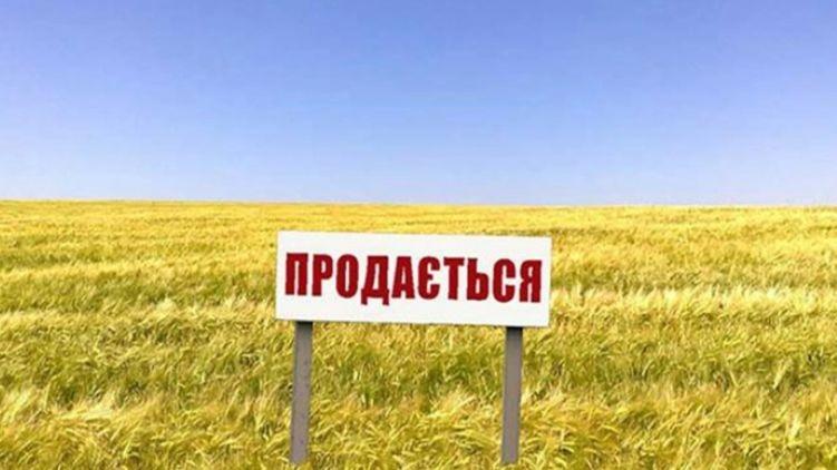 100 дней рынка земли: средняя цена гектара составляет 33 тысячи
