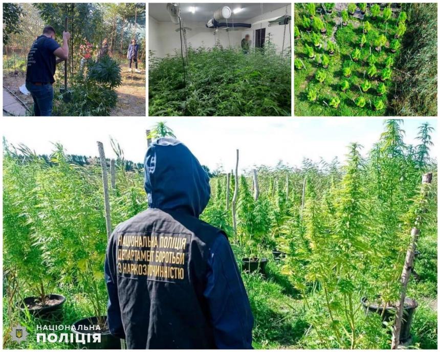 Полицейские Николаевской области за 4 месяца изъяли более 7000 кустов конопли и 3500 – мака