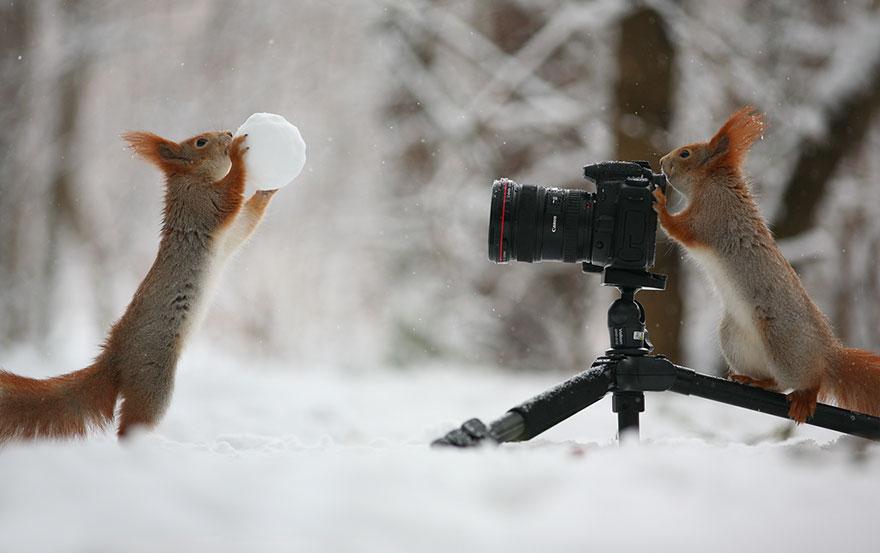 Тему зима, картинки зима природа прикольные